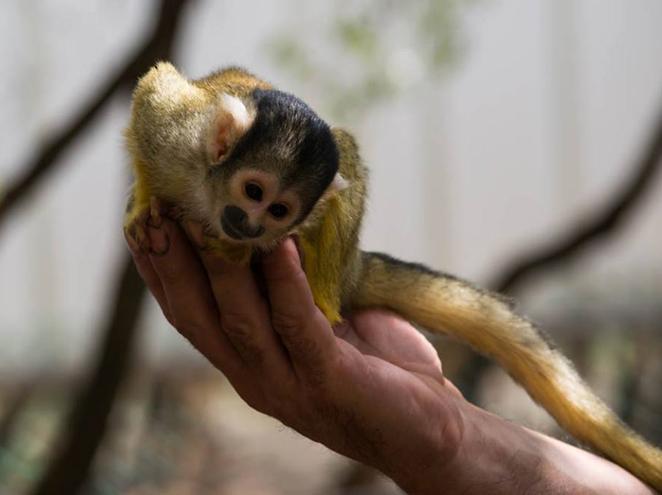 יער הקופים - כרטיסים מוזלים